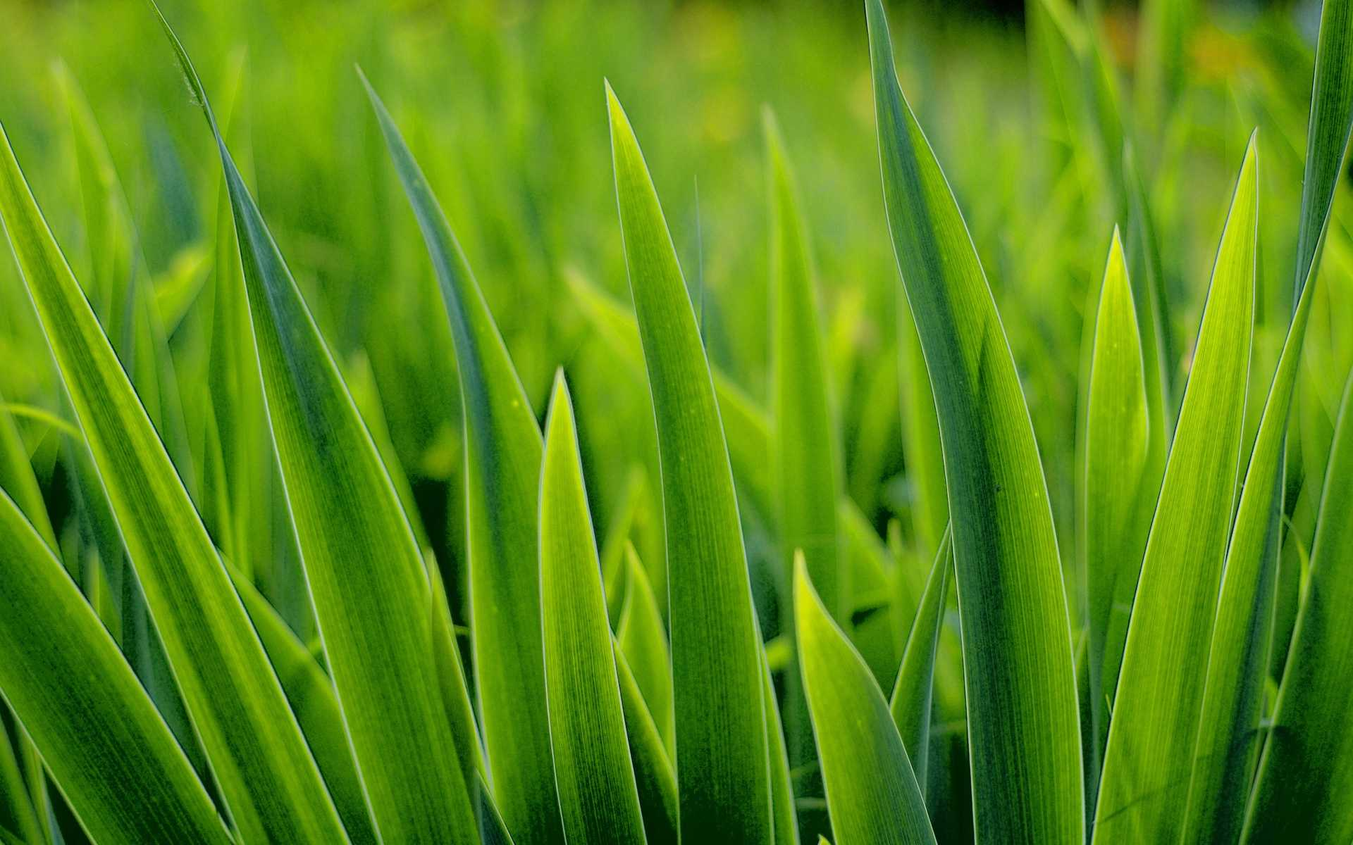 17-grass-wallpaper